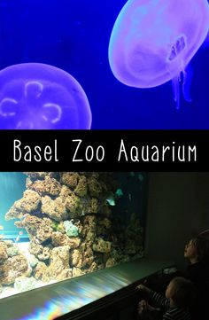 Kids will love the big Basel Zoo Aquarium, great for cold rainy days - Switzerland 4 Kids Rainy Day Activities For Kids, Family Activities, Alpine Coaster, Switzerland Trip, Interactive Museum, Ropes Course, Basel, 4 Kids, Sea Creatures
