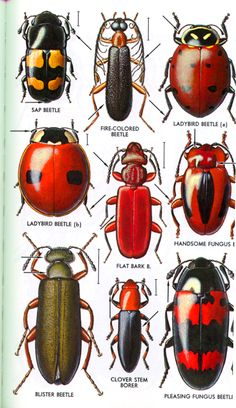 E Check this out -- cool bugs, this website has a ton of cool pictures of bugs!!