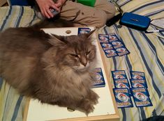 100% Proof That Cats Are Total Jerks On Purpose #Cats #Pets #Animals