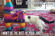 funny cat in butts