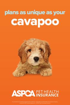 Every breed has different health needs. ASPCA Pet Health Insurance plans were designed with the needs of Cavapoos in mind. Return to your quote today to view customized plan options for your pet. Health Insurance Plans, Pet Insurance, Health Care Coverage, Cavapoo, Dog Cat, Quote, How To Plan, Pets, Fun