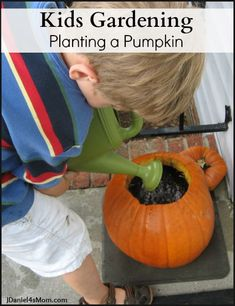 Planting pumpkin seeds in a pumpkin shell is a fun kids gardening project. We had a the best time watching the pumpkin seeds sprout in the shell. Preschool Science, Science Experiments Kids, Science For Kids, Preschool Class, Science Lessons, Science Activities, Halloween Science, Halloween Activities, Planting Pumpkin Seeds