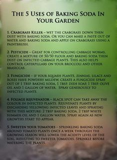 Uses of baking soda in garden