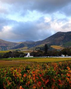 Cape winelands Beautiful Scenery, Beautiful Places, Painting Trees, Macbook Wallpaper, Sunset Landscape, Cape Town, Painting Inspiration, Landscape Photography, South Africa