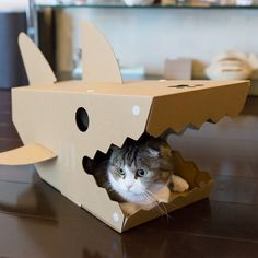 The Shark House is a fun cardboard pet home that will give the impression your cat is being eaten by a hungry mini Jaws! The Japanese are brilliant at creating totally new kinds of pet toys and the unique shape of the Shark House means you will always get plenty of cute moments with your cat just begging for photo after photo. The Shark House has fins, a tail and teeth, plus the carnivorous fish even has three gills. It's designed originally for cats, though small dogs (and kids) may also…