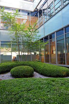 Landschaftsarchitektur, Landscape architecture,  Paisajismo, diseño de jardines. Jardín patio edificio oficinas Madrid 2007. Courtyard, Buxus Cloud hedges, box & farfugium