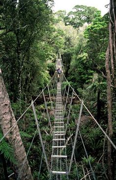 This bridge is strung across a stream on the Rakiura Track on Stewart Island. cross a river when it is in flood. Hope you aren't afraid of heights Misty Dawn, New Zealand South Island, Great Walks, Hiding Places, Adventure Tours, Great Friends, Rafting, Continents, National Parks