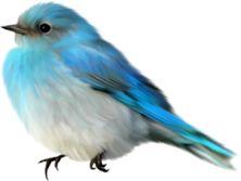 "Photo from album ""Douceur Enfantine"" on Yandex. Bird Clipart, Bird Theme, Bird Drawings, Drawing Birds, Bird Crafts, Album, Blue Jay, Cute Illustration, Bird Watching"
