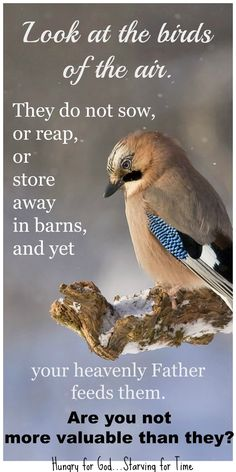 God LOVES His creations, including His birds... He LOVES us even more than the birds which He takes care of in every way! He takes care of us and guides us in Every way. Thanking You, Lord!