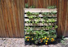 Oh man, Vertical Pallet Garden. I finally found a portable, cheap way to make my herb garden! Vertical Pallet Garden, Herb Garden Pallet, Pallets Garden, Pallet Planters, Pallet Gardening, Gardening Supplies, Outdoor Art, Outdoor Pallet, Summer Diy