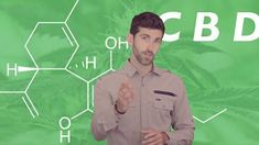 Is Using Cannabidiol for You? The Truth about CBD Oil