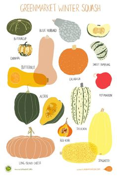 Grow NYC Winter Squash Poster by Claudia Pearson Fruit And Veg, Fruits And Veggies, Starchy Vegetables, Gardening Vegetables, Healthy Vegetables, Growing Vegetables, Food Illustrations, Creative Illustration, Food Hacks