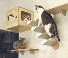 Awesome Diy Cat Playground Design Ideas To Try For Your Interior 06 Cat Climbing Wall, Cat Wall Shelves, Cat House Diy, Diy Cat Tree, Dog Smells, Cat Playground, Playground Design, Cat Towers, Animal Room