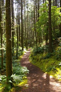 One of my favorite hikes, Hobbit Trail to the beach. A path snakes through a lush forest in Oregon's Washburne State Park.