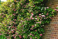 - Plantas de exterior resistentes al sol ...