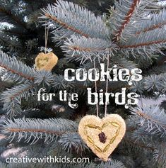 Really Easy Cookies for the Birds!