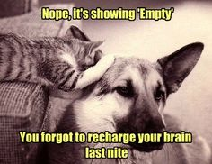 Nope, it's showing 'Empty'. You forgot to recharge your brain last nite.