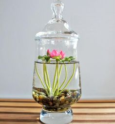 Miniature Lotus Water Lily Terrarium via A NOT so secret garden