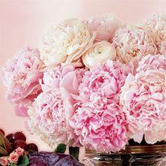 Peonies--favorite flower.
