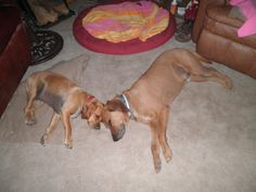 Big hound, little hound!!!!