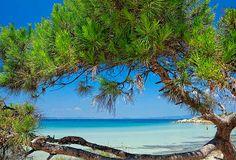 Halkidiki, Sithonia, Karydi beach, Greece. En av de vackraste ställena på Halkidiki, Grekland