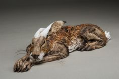 'sleeping Havergate Hare 2' stoneware