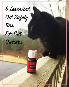 6 Essential Oil Safety Tips for Cat Owners | Did you know that some essential oils are toxic to cats?? I didn't at first, but I'm so glad that I know now! Click through for a list of essential oils toxic to cats, as well as some tips for keeping them away from kitty without having to throw them out!