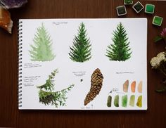Tree Study, Conifer Trees, Botany, Biology, Illustrations, Illustration, Ap Biology, Illustrators