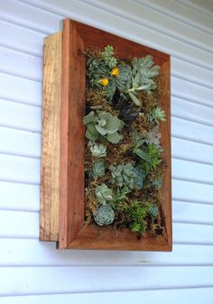 vertical wall planter boxes for succulents by seasidegarden - want to do with whole door frames and fill with huckleberries! Vertical Succulent Gardens, Vertical Wall Planters, Succulents Garden, Succulents In Containers, Container Plants, Container Gardening, Amazing Gardens, Beautiful Gardens, Decoration Plante