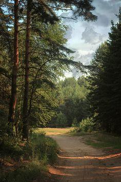 umq:  Forest {Natali Pushkareva}