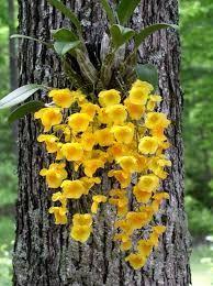 Resultado de imagen de images of orchids in natural environment