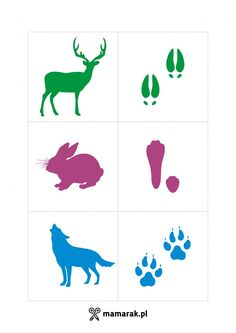 gra Animal Activities, Infant Activities, Preschool Activities, Arctic Animals, Forest Animals, Bear Footprint, College Crafts, Animal Footprints, Animal Body Parts