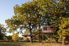 Everyone Needs A Tree Cube!    (need to switch it to English in order to read)    baumraum | home