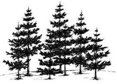 Beccy's Place: Pine Grove Would be a perfect foreground for a sunset inspired watercolor Pine Tree Silhouette, Silhouette Images, Wood Burning Stencils, Wood Burning Patterns, Kiefer Silhouette, Tree Stencil, Pyrography Patterns, Tree Sketches, Tree Patterns