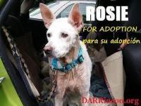 Rosie - Shepherd
