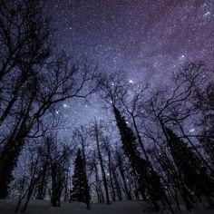 Миллионы небесных светил ярко светят в морозную ночь.