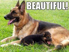 I love dogs - next police K-9