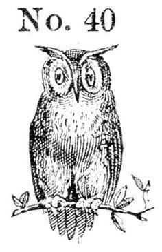 Owl No. 40