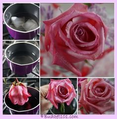 DIY Lavender Bath Bombs Ingredients: This recipe creates about 12 bath bombs. Mason Jar Crafts, Mason Jar Diy, Resin Flowers, Dried Flowers, Diy Home Decor Projects, Diy Projects To Try, Perserving Flowers, Drying Roses, Diy Wax