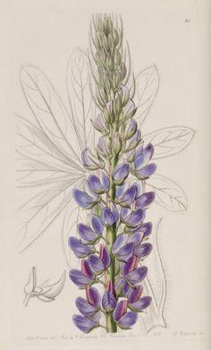 (23) Gallery.ru / Фото #17 - Анатомия растений 2 - lanaluz