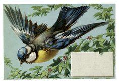 Gorgeous Vintage Bluebird Image! - The Graphics Fairy
