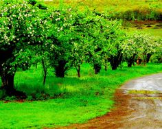 Apple Orchard After the Rain  8 X 10 Matted by KonvaliiaDesigns, $25.00