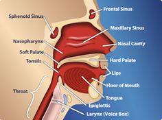 Head & Neck Anatomy   #dentist #dentistry #HeadandNeckAnatomy  Google+