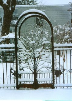 Image detail for -bifold garden gate with arbor made in the form of a tree in winter ...