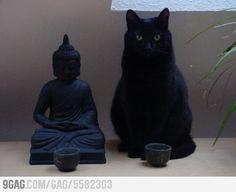 buddha. black cat meditate