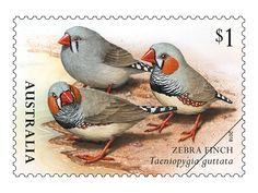 "Issued of March Zebra Finch ""Taentopejgia guttata"". Set of Finches of Australia stamps product photo DETAILS Australian Parrots, Zebra Finch, Art Folder, Vintage Stamps, Mail Art, Stamp Collecting, Bird Art, Australia 2018, Finches"