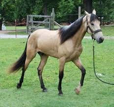 horses walking - Google Search