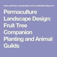 Permaculture Landscape Design: Fruit Tree Companion Planting and Animal Guilds