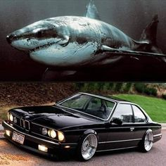 Land Shark Bmw Classic Cars, Classic Sports Cars, M2 Bmw, Bmw 635 Csi, Bmw M Series, Vw Gol, Bmw Love, Benz Car, Cars And Motorcycles