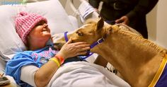 Miniature Horses As Therapy Animals? No Neigh!